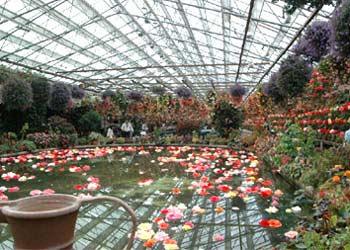 Vườn hoa dưới chân núi Phú Sỹ